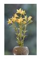 yellow_plant